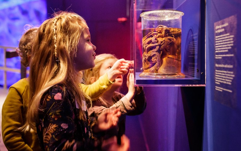 Maritiem Museum - educatie Zeemonsters - Kraak